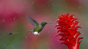 Preview wallpaper hummingbird, bird, flying, plant