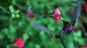 Preview wallpaper hummingbird, bird, wings, movement, flowers