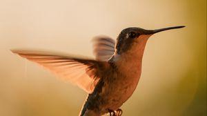 Preview wallpaper hummingbird, bird, wings, movement, beak