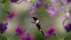 Preview wallpaper hummingbird, bird, wings, flap