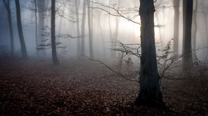 Preview wallpaper hungary, trees, fog, autumn
