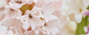 Preview wallpaper hyacinth, flowers, petals, pastel, light