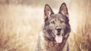 Preview wallpaper dog, face, grass, blurring 1366x768
