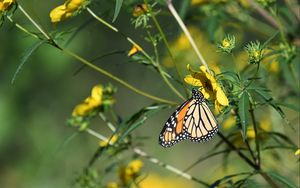 Preview wallpaper insect, butterfly, flower, leaves, macro