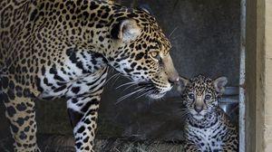 Preview wallpaper jaguar, cub, mother, caring