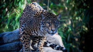Preview wallpaper jaguar, wild cat, predator, muzzle