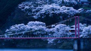 Preview wallpaper japan, bridge, sakura, night