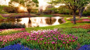 Preview wallpaper japan, tokyo, morning, sun, rays, sunrise, park, pond, trees, flowers, muscari, blue, tulips, colorful