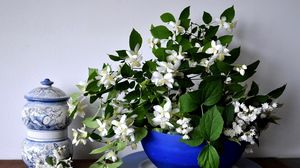 Preview wallpaper jasmine, flower, spring, bowl, china