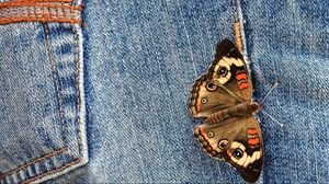 Preview wallpaper jeans, butterfly, wings