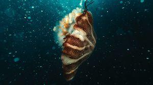 Preview wallpaper jellyfish, underwater world, under water, bubbles