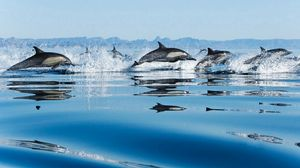 Preview wallpaper jump, water surface, dolphins