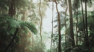Preview wallpaper jungle, forest, liana, trees