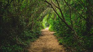 Preview wallpaper jungle, path, trees, bushes, nature