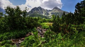 Preview wallpaper jungle, stones, vegetation, mountains