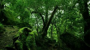 Preview wallpaper jungle, wood, green, moss, lianas, thickets