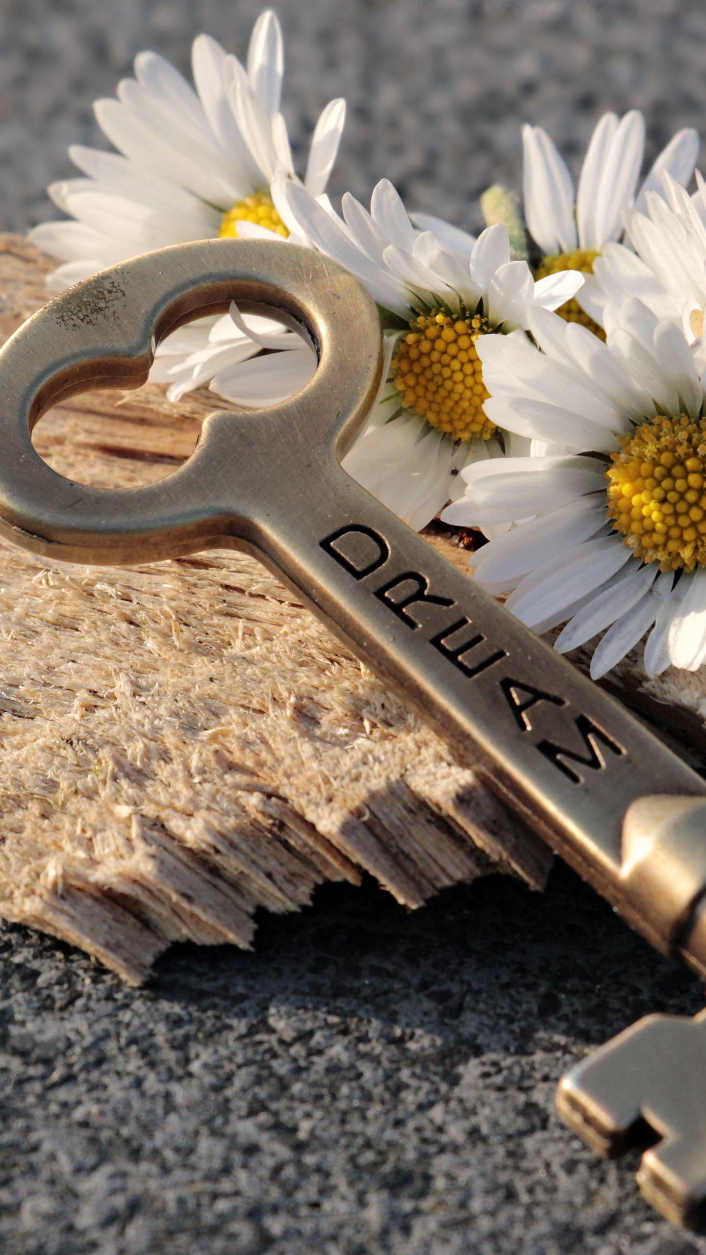 1440x2560 Wallpaper key, daisies, inscription, dream