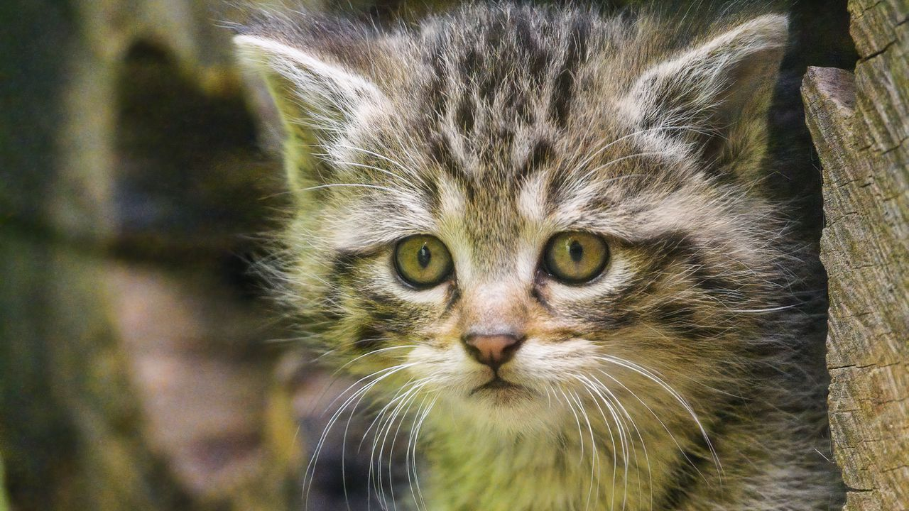 Wallpaperkitten,animal,cute,wildlife高清壁纸免费下载