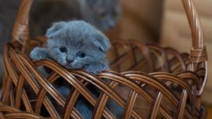 Preview wallpaper kitten, british shorthair, cute, sad, basket