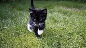 Preview wallpaper kitten, cat, grass, walk, cute