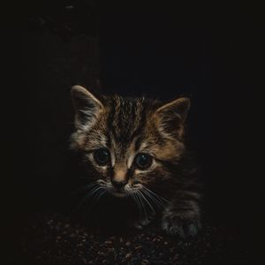 Preview wallpaper kitten, cute, small, brown, pet