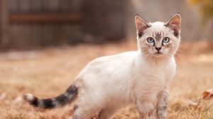 Preview wallpaper kitten, cute, walk