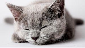 Preview wallpaper kitten, dream, muzzle, baby