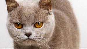 Preview wallpaper kitten, face, anger, look