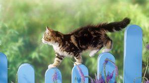 Preview wallpaper kitten, fence, walk, fluffy