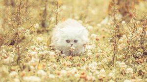 Preview wallpaper kitten, fluffy, grass, flowers, run