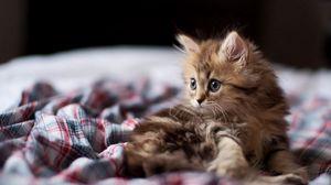 Preview wallpaper kitten, fluffy, look