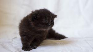 Preview wallpaper kitten, fluffy, look, kid