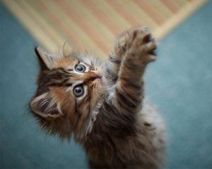 Preview wallpaper kitten, game, paws, fur, furry