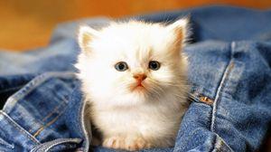 Preview wallpaper kitten, jeans, face