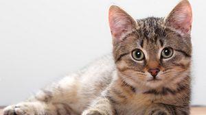 Preview wallpaper kitten, lie, muzzle