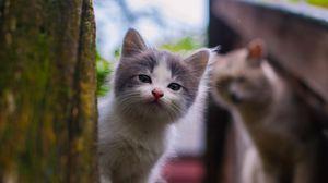 Preview wallpaper kitten, look, street, spotted