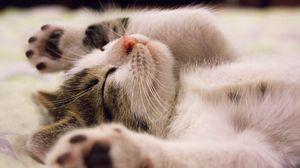 Preview wallpaper kitten, lying, baby, dream