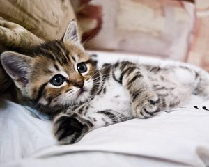 Preview wallpaper kitten, lying, striped, small, cute