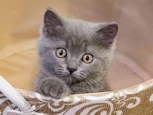 Preview wallpaper kitten, pet, cute