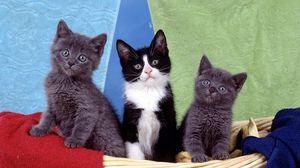 Preview wallpaper kittens, kids, sit