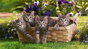 Preview wallpaper kittens, shopping, kids, grass, flowers