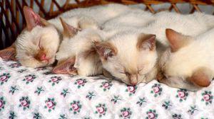 Preview wallpaper kittens, sleep, kids, many