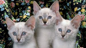 Preview wallpaper kittens, three, kids