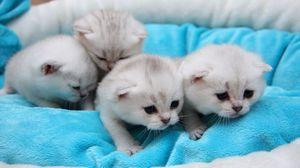 Preview wallpaper kittens, young, kids, lie