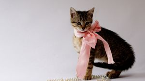 Preview wallpaper kitty, bow, beads, jewelry, beautiful
