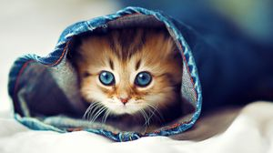 Preview wallpaper kitty, jeans, face, furry, hide