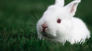 Preview wallpaper rabbit, grass, white, muzzle