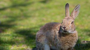 Preview wallpaper rabbit, grass, ears, shadow
