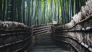 Preview wallpaper ladder, forest, bamboo, trees