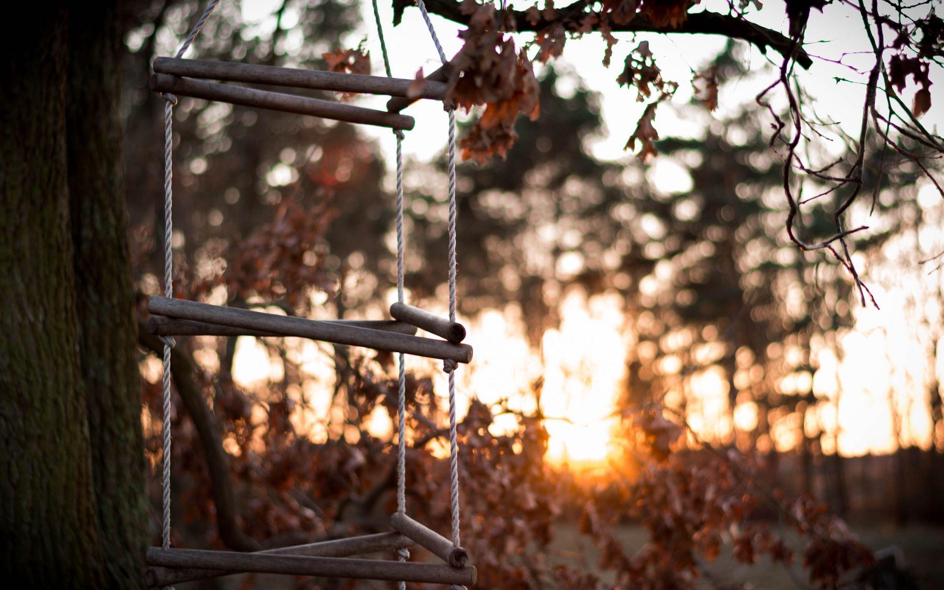 1920x1200 Wallpaper ladder, rope, tree, sunset, autumn